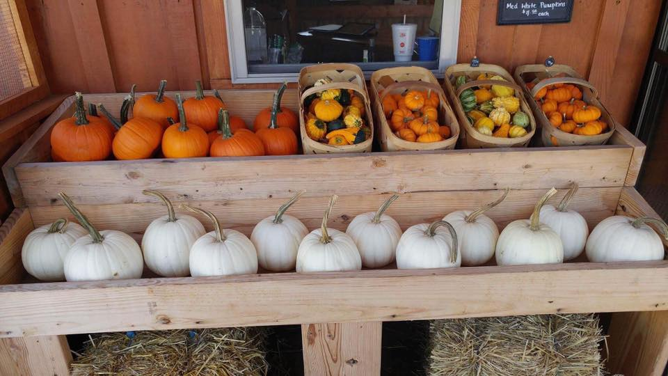 McMonigle Farms Pumpkin Fest of Middletown
