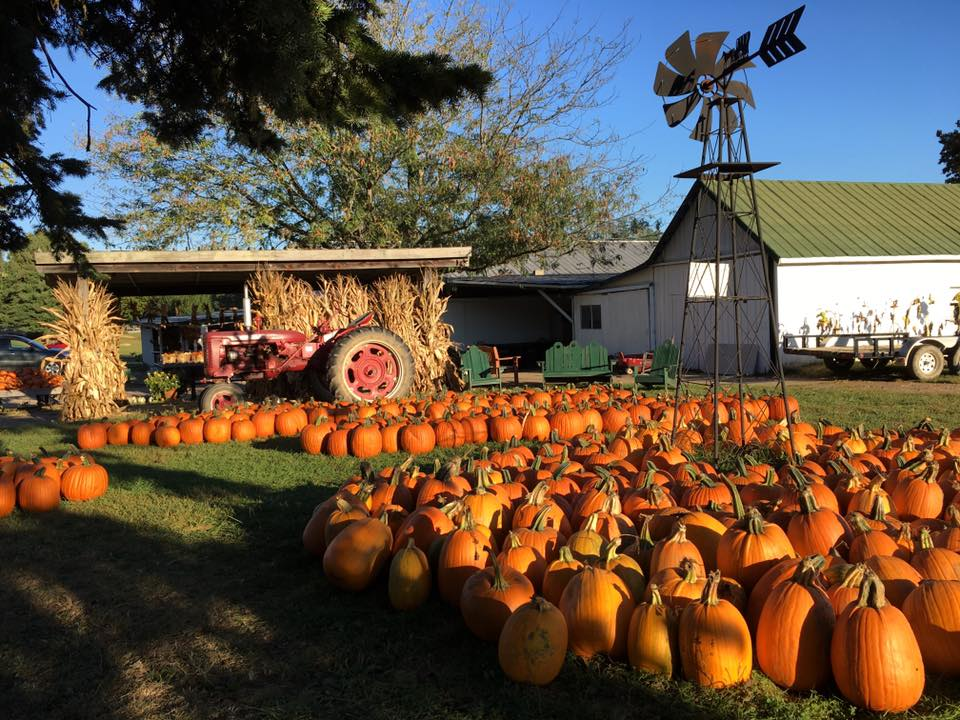 Mcglasson Farms - Cincinnati Pumpkin Patches